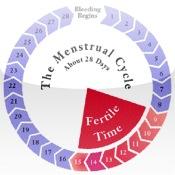 Menstrual Cycle menstrual