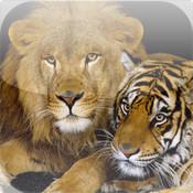 Animals Reign HD