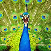 241 Amazing Animal