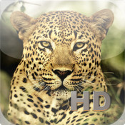Animal Kingdom HD