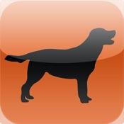 Puppy & Dog Training (Swedish)