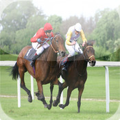HORSE RACING TIPS MP Prof