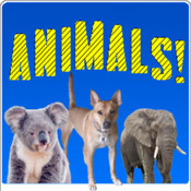 My Animals Game