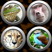 Animal Button Box