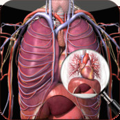 Anatomy Chest Pro