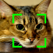 Cat Detection Camera system detection