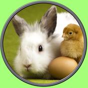 rabbits of my kids - no ads