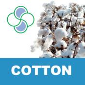 Cotton Stoller