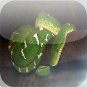 Snakes Pocket Book