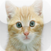 All Kittens Jigsaw free kittens in minnesota