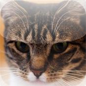 iCats - US Cat Breeds