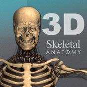 Skeletal 3D ANATOMY