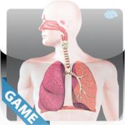 Respiratory Anatomy Game