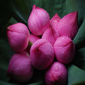 Free Flower Name In 13 Languages from Normandy Flower Online