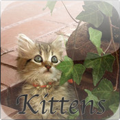 Cutest Cats & Kittens free kittens in minnesota