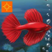 Fish Tycoon for iPad