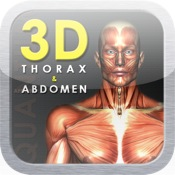 3D Thorax And Abdomen