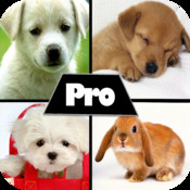 Cute HD Pictures Pro