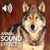 Amazing Sounds By Animal