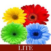 Keyword Understanding Lite