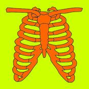 Bones, Joints & Muscles