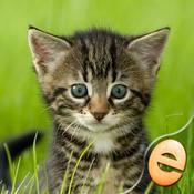 Jigsaw Wonder Kittens Puzzles for Kids Free free kittens in minnesota