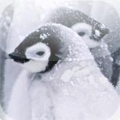 Penguins HD Wallpaper penguins game