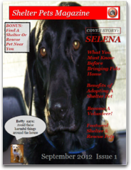 Shelter Pets Magazine