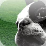 Dog Training Sound Set