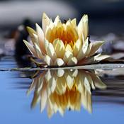 A+ Photo Reflection HD - Reflection Effect On Fotos para PhotOFUnia,HULU