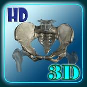 3D Human Skeleton Hip HD