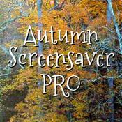Autumn Screensaver Pro bear screensaver