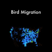 Bird Migration sap data migration
