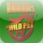 Lizard Keeping Pet Guide