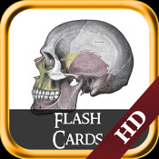 Gray Anatomy - Flash Cards
