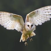 Owl Pellet Activities HD