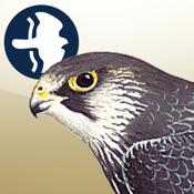 Birds of Northern Europe accounts