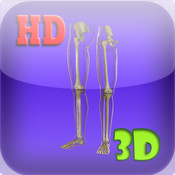 3D Medical Leg Skeleton HD