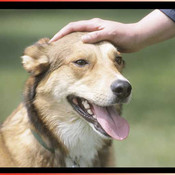 Dog Training Guide - An expert guide to training your puppy or dog