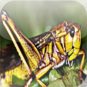 Locust - Outdoor Noises Now in Your Hand