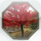 Japanese Garden Wallpaper