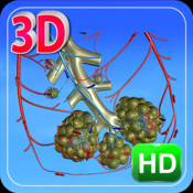 3D Human Blood Circulation Lung_HD