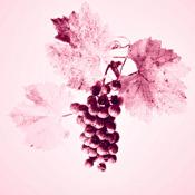 Atlas des Grands Vignobles de Bourgogne