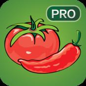 Salsa Pro - Spanish Language Learning Game