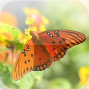 How to Attract Butterflies to Your Garden!