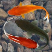 Beautiful Fish Screensaver Free free fire screensaver 1 31