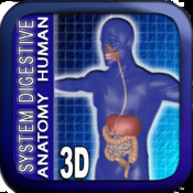 Anatomy Digestive System 3D