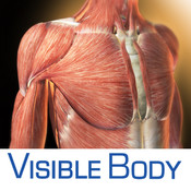 3D Muscular Premium Anatomy for iPhone 4/4S