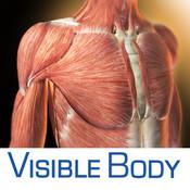 3D Muscular Premium Anatomy for iPad 2