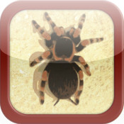 Pocket Tarantula 3D - Free Pet Spider